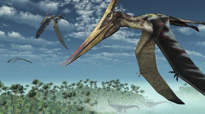 Reptiles voladores han sido hallados en Africa (video)